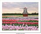 Tulips Field Art Print Home Decor Wall Art Poster - D