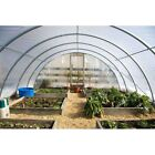 4 Year 6 Mil Clear Plastic Greenhouse Poly Film 48 ft. Wide - *VARIOUS LENGTHS*