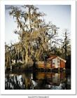Swamp Reflections Art Print/Canvas Home Decor Wall Art Poster - B