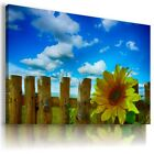 SUNFLOWERS YELLOW SUMMER FLOWER FIELDS Canvas Wall Art Picture Large FL36 X