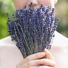 DIY100 Stems Bunch of Natural Bouquet Lavender Dried Flower Wedding Party Decor