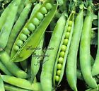 Early Frosty Pea Seeds Non GMO Sweet Round Pods Fresh or Frozen Shell or Pod use