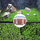 Aquarium Fish Tank Aquatic Plant Water Grass Seeds Foreground Plants Decor