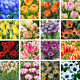 100Pcs Variety Tulip Seeds Beautiful Flower Floral Home Garden Plant Decor Cool