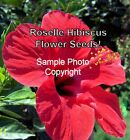 Hibiscus sabdariffa Roselle seeds! Red Flower Drought Tolerant Ornamental Garden