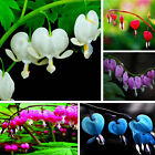 200pcs Perennial Dicentra Bleeding Heart Flower Seeds Home Garden Plants Decor