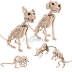 Внешний вид - Halloween Skeleton Cat Dog Mouse Prop Animal Bones Party Shop Decoration Horror