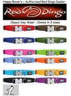PREMIUM RED DINGO Dog Collars - All Sizes/Colors - Everyday