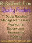 Kyпить Live Large Mealworms Cupped на еВаy.соm