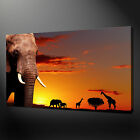 AFRICAN ANIMALS SUNSET ELEPHANT WALL ART CANVAS PRINT PICTURE READY TO HANG