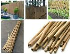 Strong Heavy Duty Professional Bamboo Canes Plant Support Garden Pole 2ft to 7ft