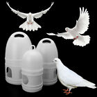 Bird-Feeder Pigeons Parrots Budgie Aviary Water-Fountain for Homing Bird