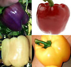 Blend of Sweet Bell Pepper Seeds (Purple/Red/White/Yellow Colored Bell Peppers)