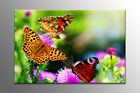 LARGE FRAMED CANVAS WALL ART YELLOW BUTTERFLY ON PURPLE FLOWER STUNNING PICTURE