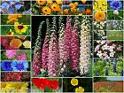 PURE WILD FLOWER SEEDS & ANNUALS BEE & BUTTERFLY 10g to 5kg  Mix 26A No Grass