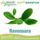 earthessence RAVENSARA ~ CERTIFIED 100% PURE ESSENTIAL OIL ~ Aromatherapy Grade