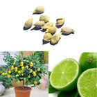 10Pcs Rare Lemon Lime Tree Indoor Outdoor Available Heirloom Fruit Seeds Garden
