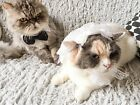 [Wedding Pet Collar for Cats and Dogs] Halloween / Costume / Bow Tie / Christmas