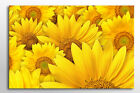 LARGE VIBRANT FRAMED CANVAS WALL ART YELLOW SUN FLOWER PICTURE PRINT ZEN NEW