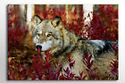 LARGE CANVAS WALL ART PRINT BEAUTIFUL WOLF AND PURPLE LEAVES IN FOREST A0 A1 NEW