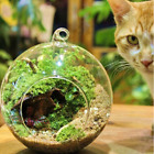 Внешний вид - Flat Clear Round Ball Flower Hanging Glass Vase Planter Fish Tank Terrarium US