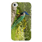Peacock Case for iPhone 4 Wildlife Bird Phone Case