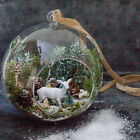 Hanging Globe Round Glass Terrarium Air Plant Candle Hold...