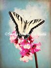 Tiger Swallowtail Butterfly on Flower Original Signed Picture Home Wall Art A243
