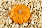 earthsgarden PUMPKIN SEED OIL 100% PURE NATURAL ORGANIC CARRIER OIL .