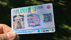 collar holders - HOLOGRAPHIC SERVICE DOG ID CARD ID KEY CHAIN COLLAR TAG FOR SERVICE ANIMAL ADA