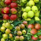 Pink Lady Fuji Gala Golden Delicious APPLE TREE Native Domestica Fruit Seeds