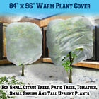 Large Size Warm Winter Plant Cover Tree Shrub Flower Cover Frost Protecting Bag