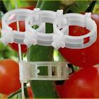 10/100Pcs Tomato clips trellis garden vegetable binder twine plant support 24mm