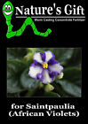 ORGANIC FERTILIZER FOR SAINTPAULIA/ AFRICAN VIOLETS, WORM CASTING CONCENTRATE
