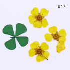 Real Nail Dried Flower Clover Leaf Preserved Flower Mixed 3D Nail Art Decoration