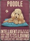 APRICOT POODLE DOG ANIMAL METAL SIGN TIN PLAQUE PICTURE OTHER BREEDS LISTED 1291