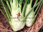 Florence Fennel Seeds Select to 5LB FREE SHIP Vegetable Spice Heirloom Herb #198