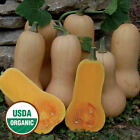 Gourmet Squash Seeds - Organic Heirlooms - Open Pollinated Non Gmo - 25 SEEDS
