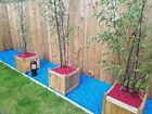 RED Decorative Garden CHIPPINGS Stones Home Garden COLOURED Gravel Colours