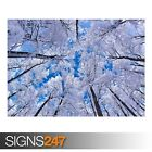 LOOKING UP THROUGH TREES WINTER (AD992) NATURE POSTER - Poster Print A0 A1 A2 A3