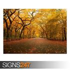 WIDE ALLEY (AE087) NATURE POSTER - Photo Picture Poster Print Art A0 A1 A2 A3 A4