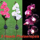 LED Solar Power Flower Landscape Lamp Garden Outdoor Yard Path Lawn Light Decor