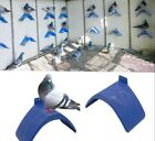 ✔ ✔ ✔ 10 Pcs Dove Rest Stand Dwelling Pigeon Perches Roost Bird Supplies ✔ ✔ ✔