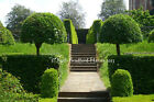 Symmetry Knot Garden Topiary Box Standards Art Photograph, Mounted Print, Cards