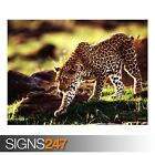CHEETAH (3512) Animal Poster - Photo Picture Poster Print Art A0 A1 A2 A3 A4