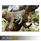 SLEEPING CHEETAH (3503) Animal Poster - Picture Poster Print Art A0 A1 A2 A3 A4