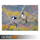 RED WHISKERED BULBUL BIRDS (3380) Animal Poster - Poster Print Art A1 A2 A3 A4