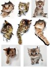 Cat Wall Toilet Stickers Waterproof For Home Decoration Funny Cats Decals