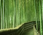 Bamboo Forest Art Poster Print New