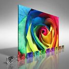 Floral Rare Rose Flower Canvas Print Large Picture Wall Art
